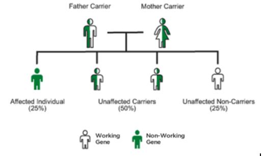 Tay-Sachs Genetic Tree